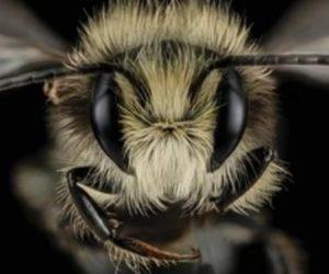Bal arısı ölümleri !